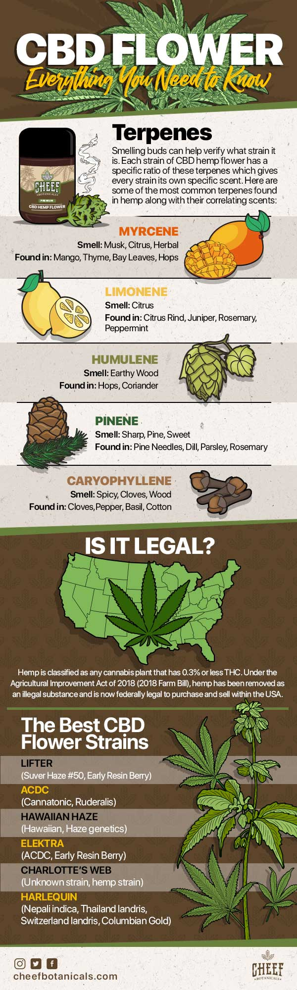 CBD hemp flower terpenes and legal status in the us infographic