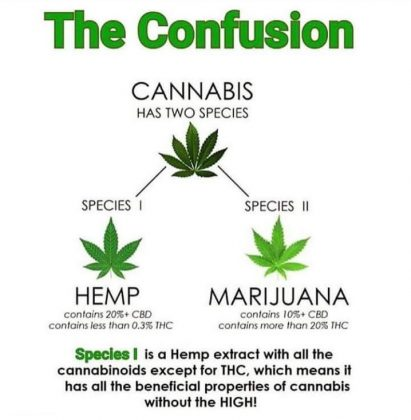 cbd hemp oil vs thc marijuana