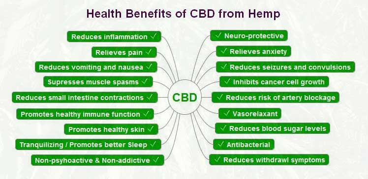 Vegan CBD Gummies Health Benefits
