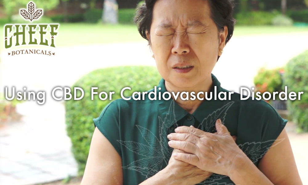 Using CBD For Cardiovascular Disorder And Heart Disease Lady Holding Heart