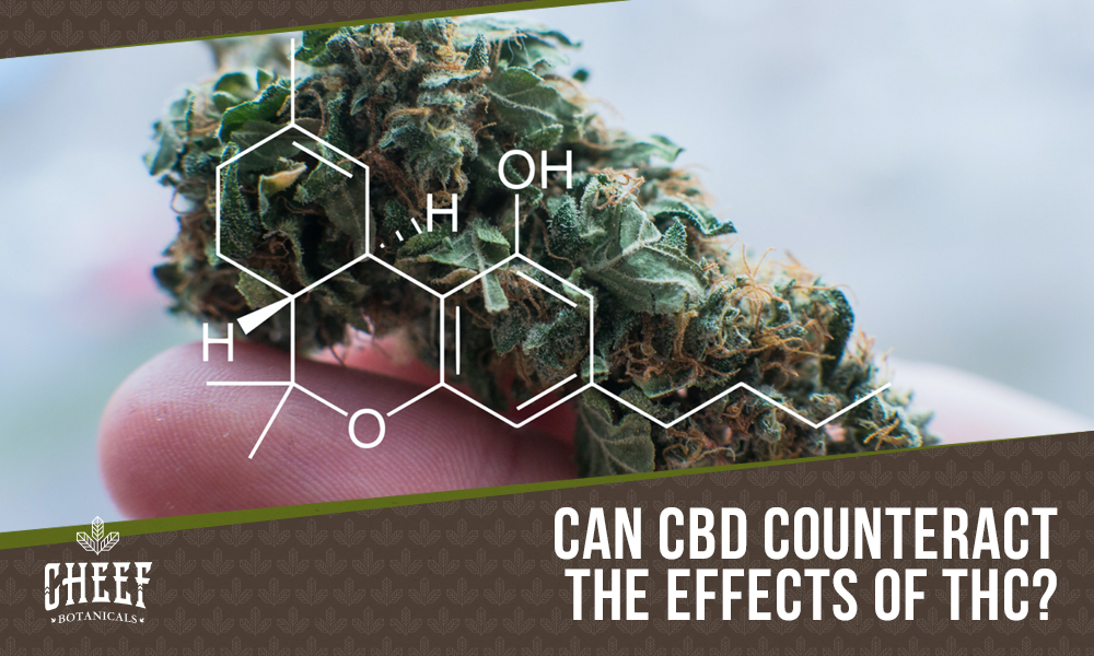 does CBD counteract THC