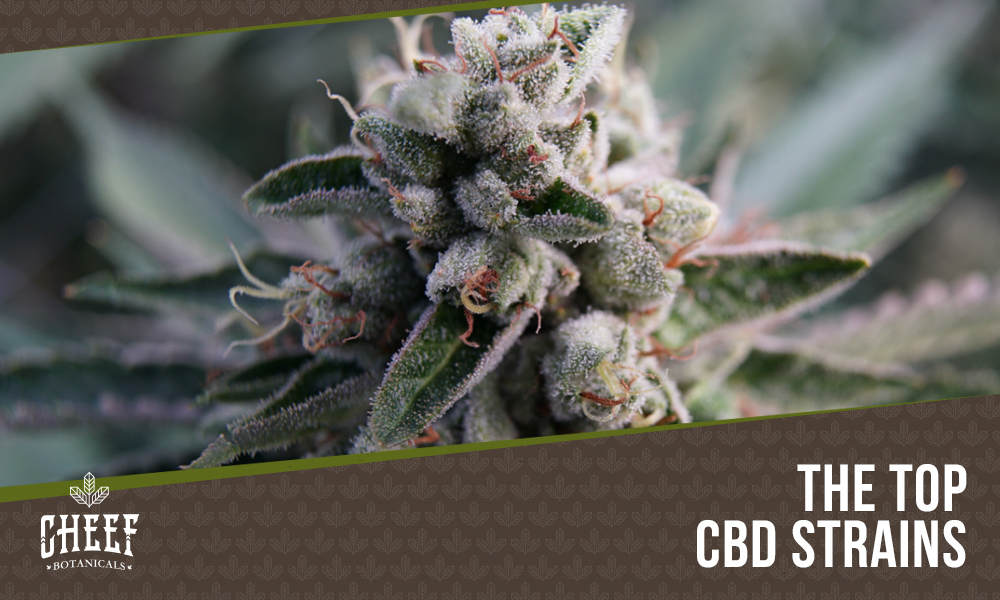 Best CBD Strains