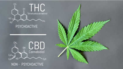 List of Cannabinoids THC CBD