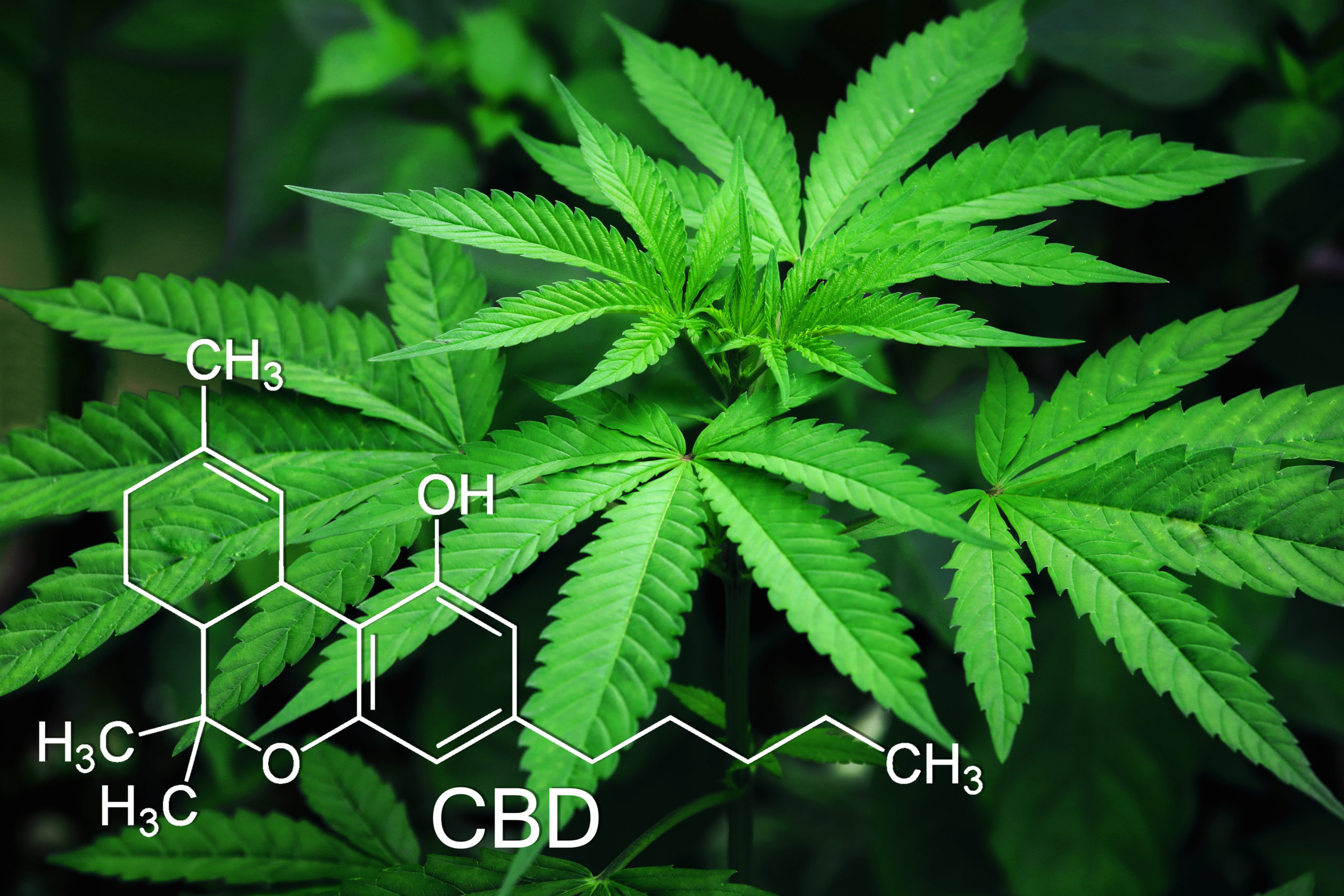 a cannabis plant with the molecular structure of cbd overlaying