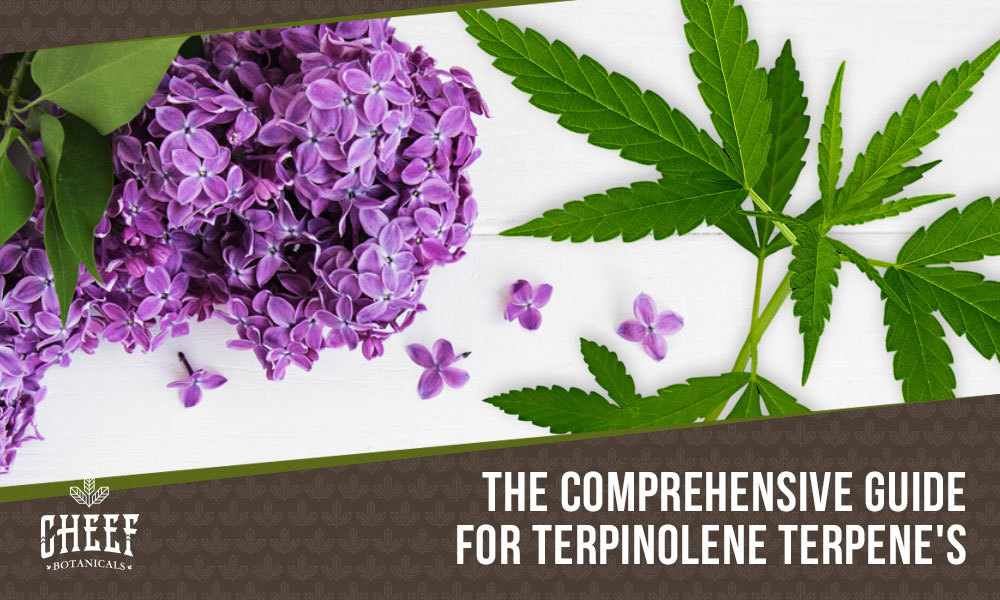 terpinolene terpene featured image