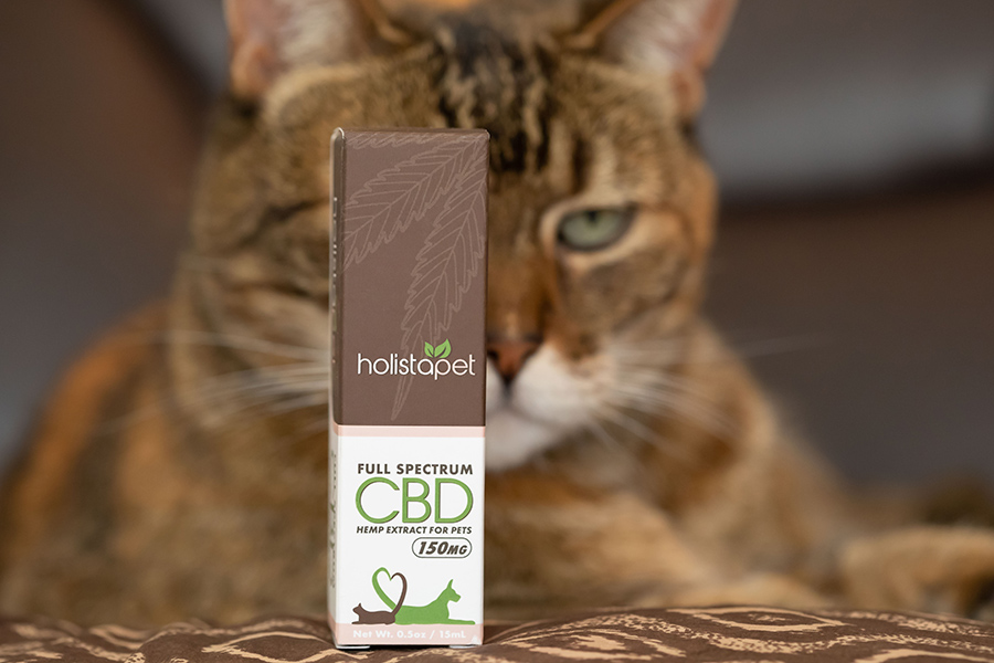 A cat focusing on a box containing CBD oil