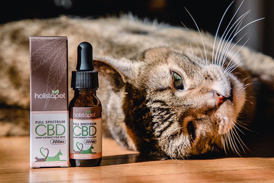 Cat stretching out and laying besides a bottle of Holistapet CBD oil for Cats