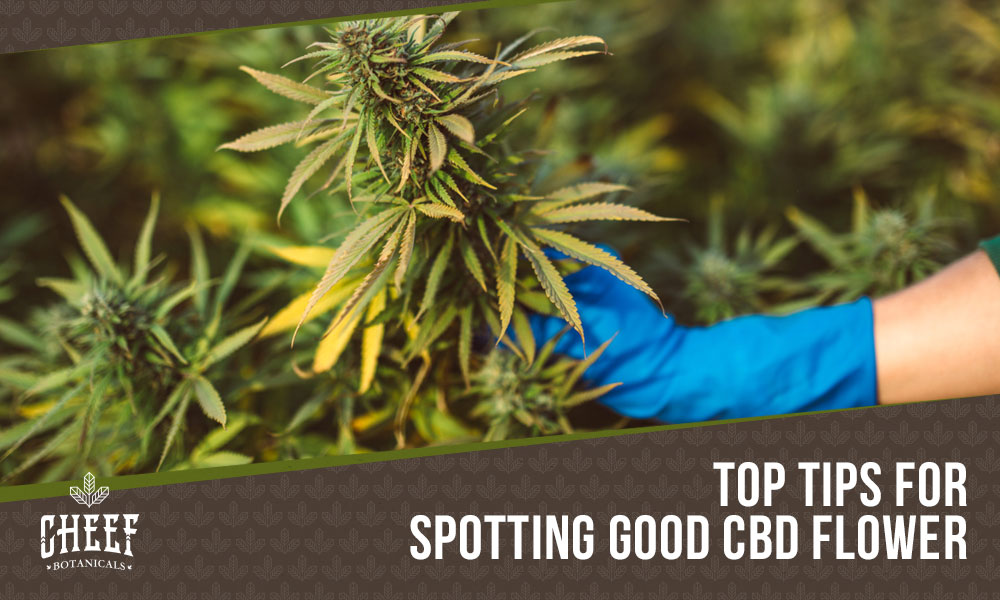what does good cbd flower look like